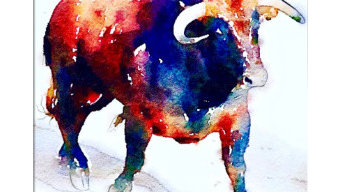 Shabs Beigh - Colourful Bull, 2019
