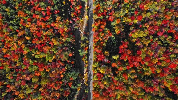 Houzz TV: Drone Video of Fall Leaves in New England Will Lift Your Soul