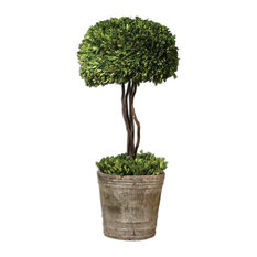 Tree Topiary Preserved Boxwood Plant in Terracotta Planter
