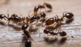 Pest Control Service Edinburgh
