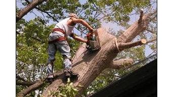 Northwest Tree & Stump Grinding Service