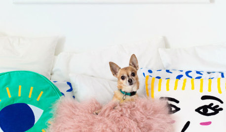 Pet's Place: Every Day Is a Party for Bella the Chihuahua