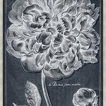 Paragon - Botanica - Striking botanical features a silver block profile wood molding.