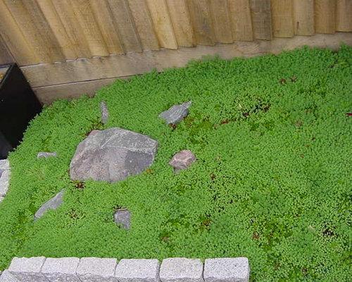 Modern japanese garden at design studio for Garden design questions