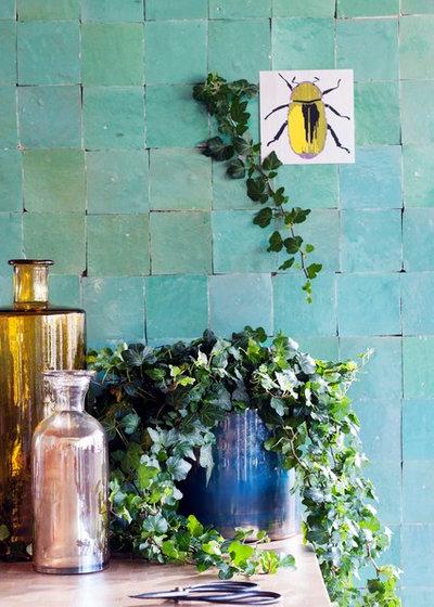 Efeu Als Zimmerpflanze efeu als zimmerpflanze die league der indoor dschungel