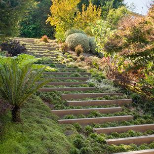 Aménagement d'un jardin contemporain avec une exposition ombragée et une pente, une colline ou un talus.