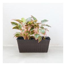 Yaddo Thin Rectangular Wicker Self-Watering Planter, Espresso, 15x7x6