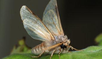 Pestend Pest Control Melbourne