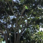 Alder tree care's photo