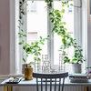 Nygammal trend: Klängväxter i fönstren istället för gardiner
