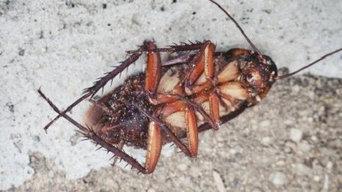 Dr Bugs Pest Control