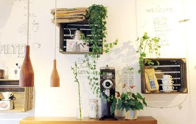 お店に学ぶディスプレイ&収納術3 植物の飾り方