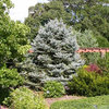 10 Evergreens for Beautiful Foliage All Year