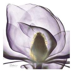 Precious Orchid in Purple Close by Albert Koetsier Canvas Print