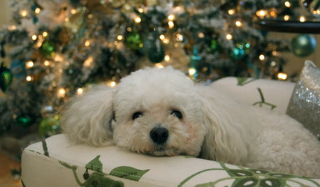 Natale Bestiale? Feste a Prova di Cani e Gatti