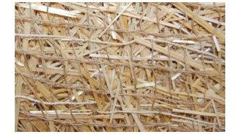 BioD-Straw