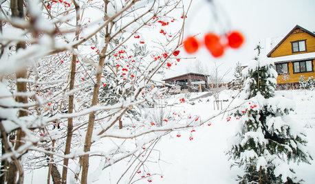 Просто фото: 20 садов в снегу