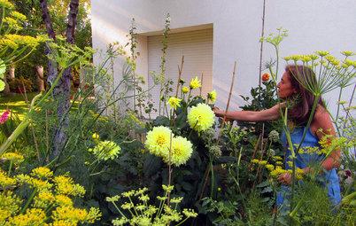 Jardín de la semana: Dalias y arte en el norte de Madrid