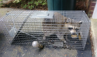 Rodent, Bird and Snake Trapping in Bladensburg, MD