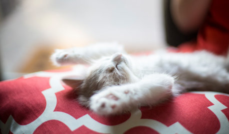 Pet's Place: 2 Kittens Grow Into Their California Home