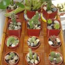 Plant Swap List