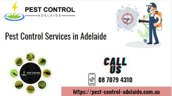 Pest Control Adelaide