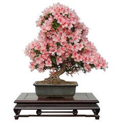 Bonsai Haus bonsai haus schwielowsee de 14548 contact info