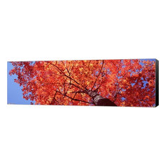 "Low Angle VIew of A Maple Tree, Wrapped Canvas, Black Sides, 27""x9"""