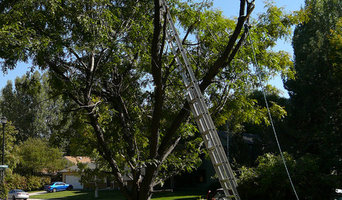 Capalaba Tree Removal in Wynnum Area