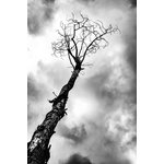 "EHL Photography - Digital Photo Print, Withered 1 5""x7"" - This is the first photo in a series of four. This listing is for an unmatted and unframed print on matte photo paper."