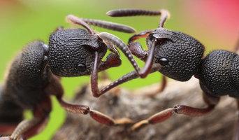 24*7 Pest Control Sydney