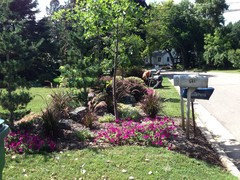 Great Plant Combinations Traditional Landscape