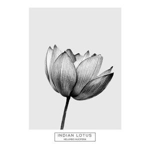 Monotone Indian Lotus Flower Botanical Print, A4