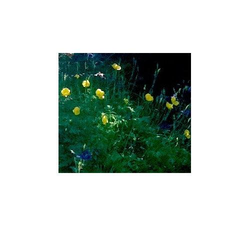 Yellow poppy like flower image link mightylinksfo