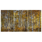 """James Bourret - """"Last Leaves"""" Photographic Print, Set of 3, Triptych, 30""""x60"""" - Large format photographic print of aspen trees on three stretched canvas panels. Overall size 60""""H x 120""""W. This photograph was made using an 80 MP digital view camera for stunning detail and depth."""