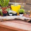DIY: Der Treibholz-Garten für den Tisch