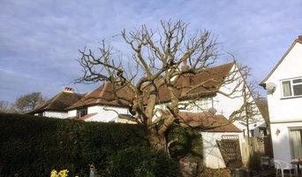 Tree Surgery Photos