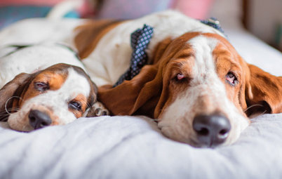 Pet's Place: Basset Hound-Inspired Powder Room
