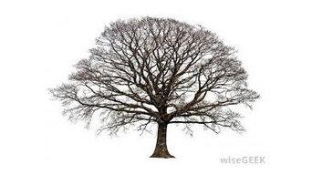 Tree Service Montgomery TX