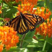Meadowview Farm & Natural Habitat Gardens, LLC's photo