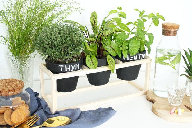 fabriquer une petite jardini re pour plantes aromatiques dans la cuisine. Black Bedroom Furniture Sets. Home Design Ideas