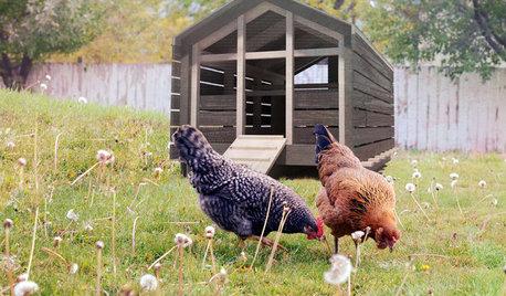 Hühnerhaltung im Garten – Tipps & Tricks