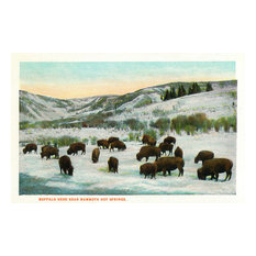 """View of Buffalo Herd Near Mammoth Hot Springs"" Print, 24""x36"""