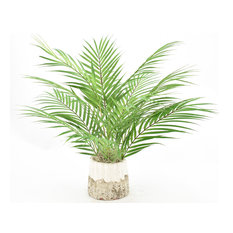 Palm Leaves In A Textured Pot