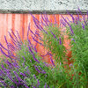 10 Plants for Colorful Fall Blooms in the Drought-Tolerant Garden
