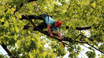 2013 Ohio Tree Climbing Championship
