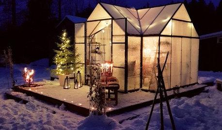 Mellandagsmys i växthuset – i minus -26°