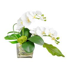 Phalaenopsis Orchid Arrangement in Vase