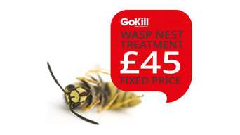 GoKill Manchester Pest Control