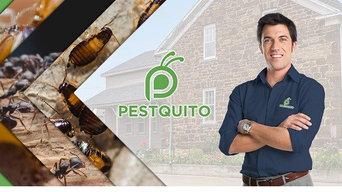 Pestquito